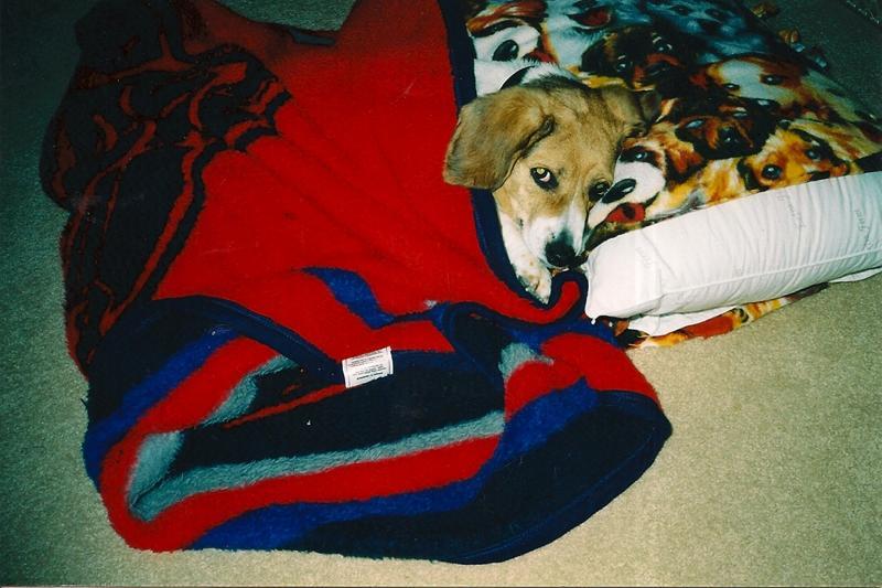 overnight pet sitting professional dog walking and pet sitting in northville mi. Black Bedroom Furniture Sets. Home Design Ideas