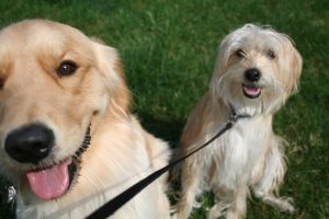 Dog Walking Rates in Northville