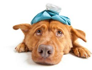 Pet Sitter Emergency Plan