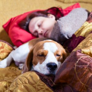 In-Home Pet Sitting