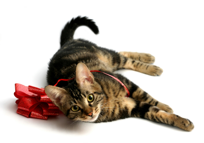 Why Chose Menlys Pet Care?