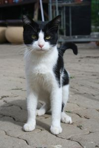 sweet_cat