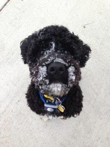 Menly's Pet Care Pet Sitting Services